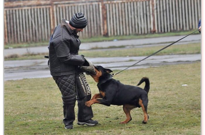 Why Schutzhund?