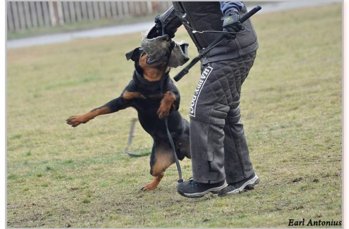 What is Schutzhund Training?