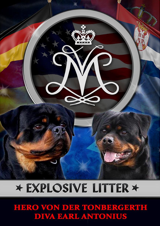 Von Muntz Rottweiler Puppies